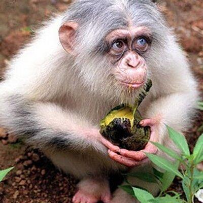 Игровой автомат Crazy Monkey Обезьянки играть.